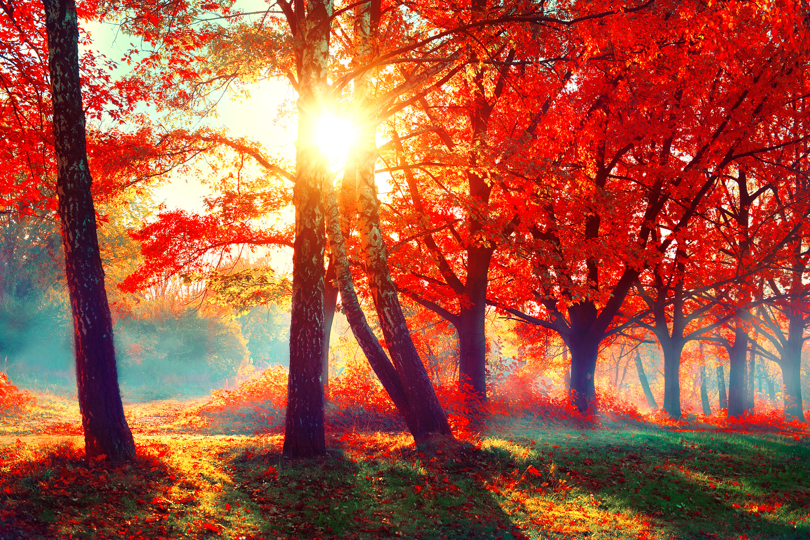 fall facts autumn scene fantastic nature landscape forest leaves trees beauty autumnal services